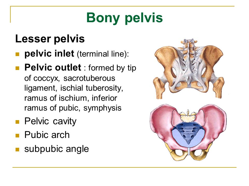 Bony pelvis Lesser pelvis pelvic inlet (terminal line):