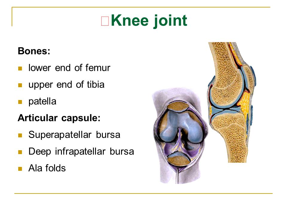 ★Knee joint Bones: lower end of femur upper end of tibia patella