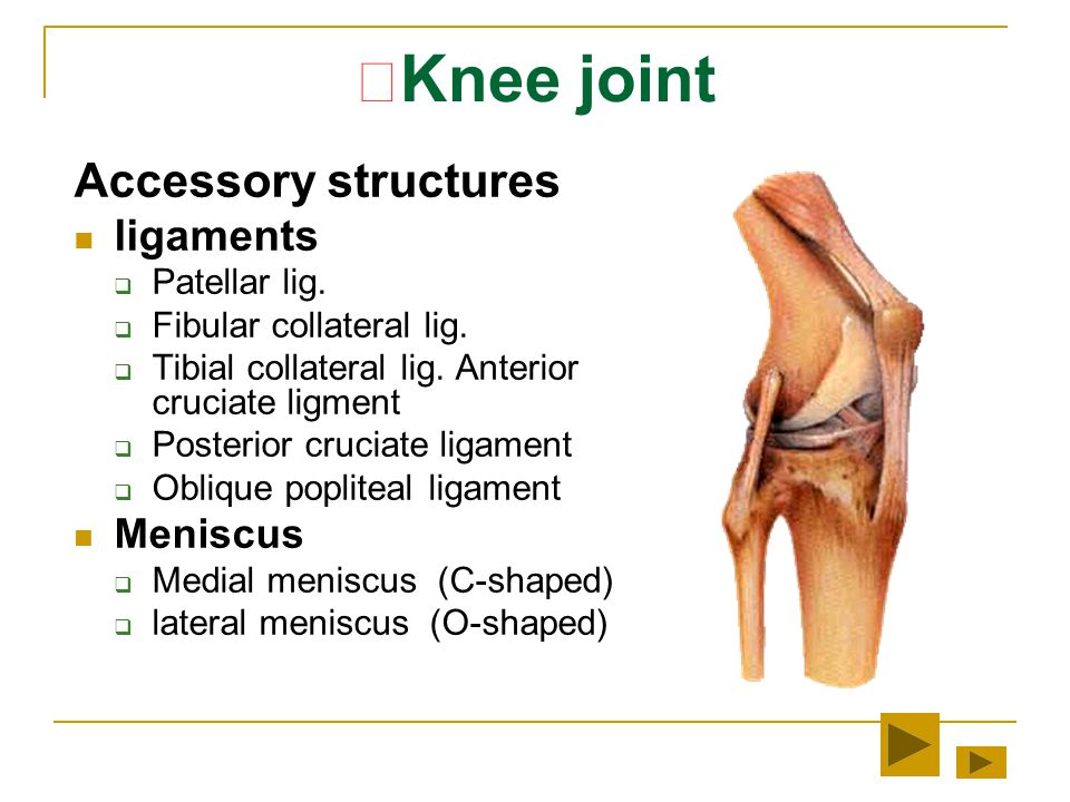 ★Knee joint Accessory structures ligaments Meniscus Patellar lig.