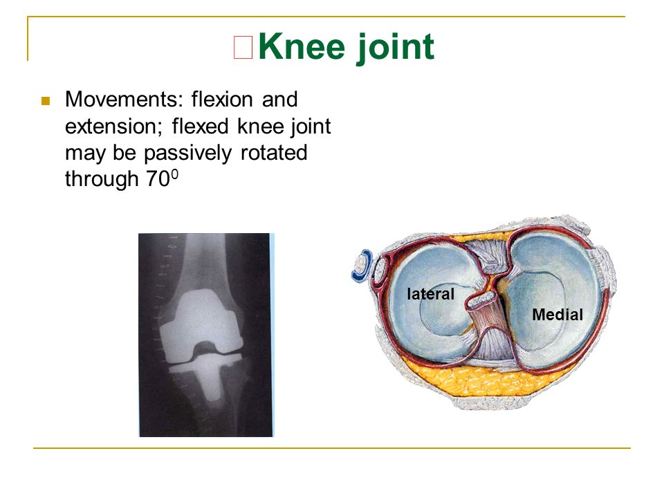 ★Knee joint Movements: flexion and extension; flexed knee joint may be passively rotated through 700.