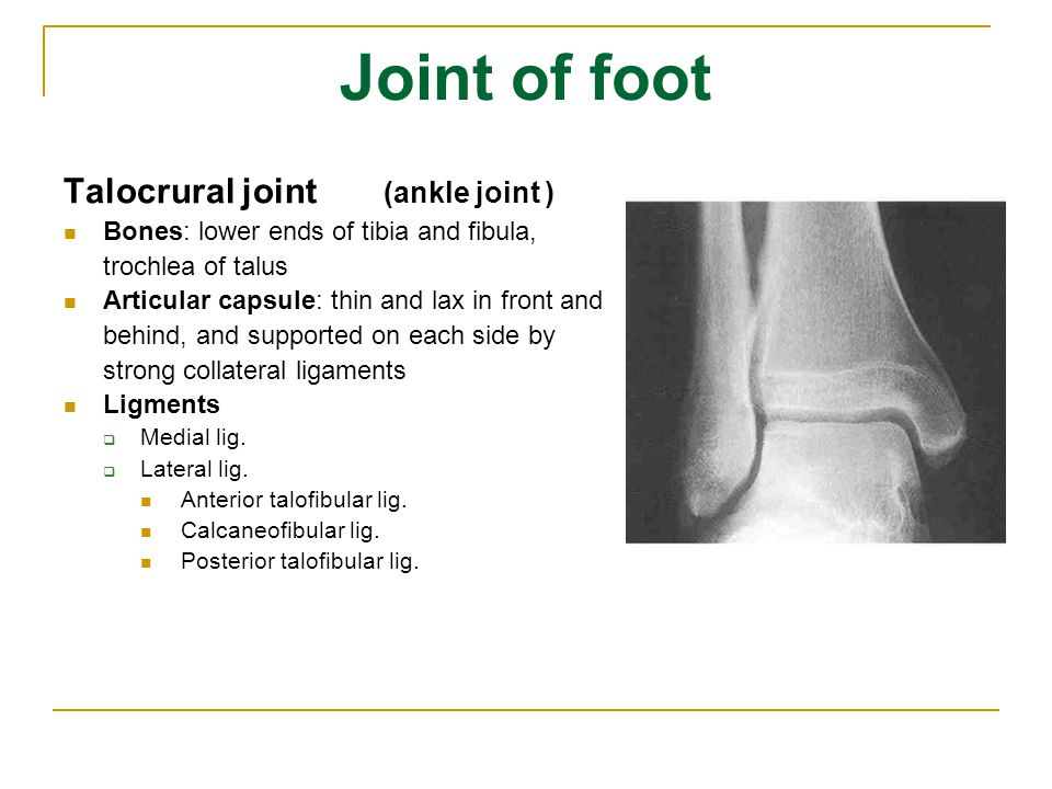 Joint of foot Talocrural joint (ankle joint )