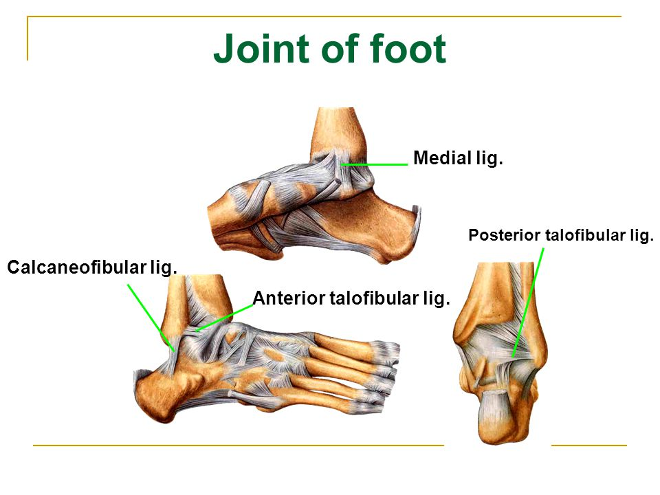 Joint of foot Medial lig. Calcaneofibular lig.