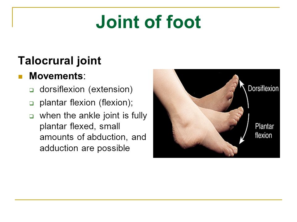 Joint of foot Talocrural joint Movements: dorsiflexion (extension)