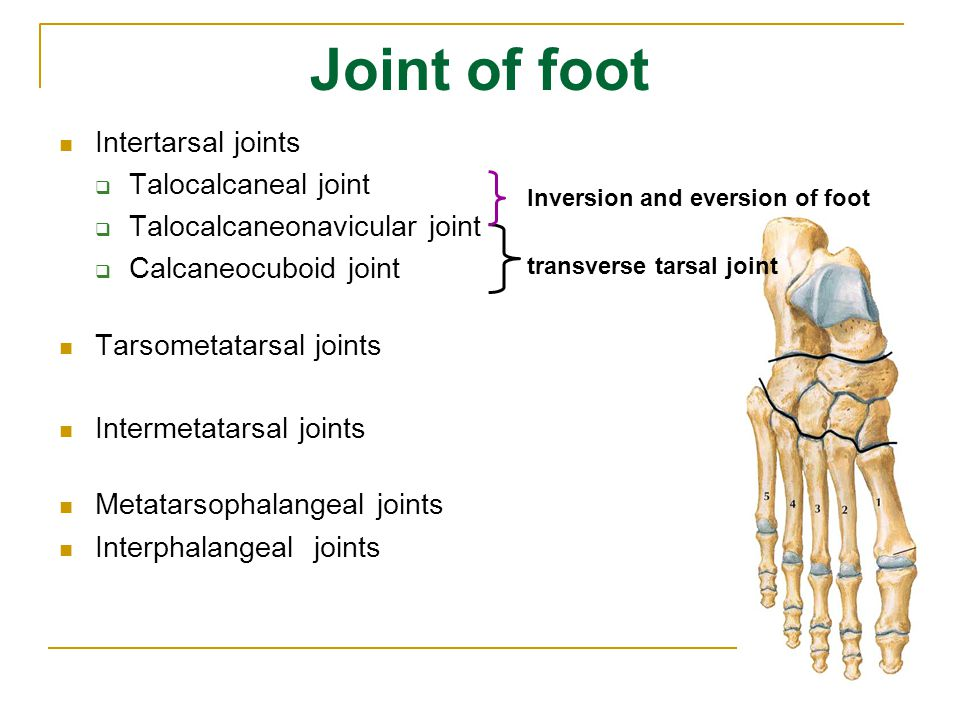 Joint of foot Intertarsal joints Talocalcaneal joint