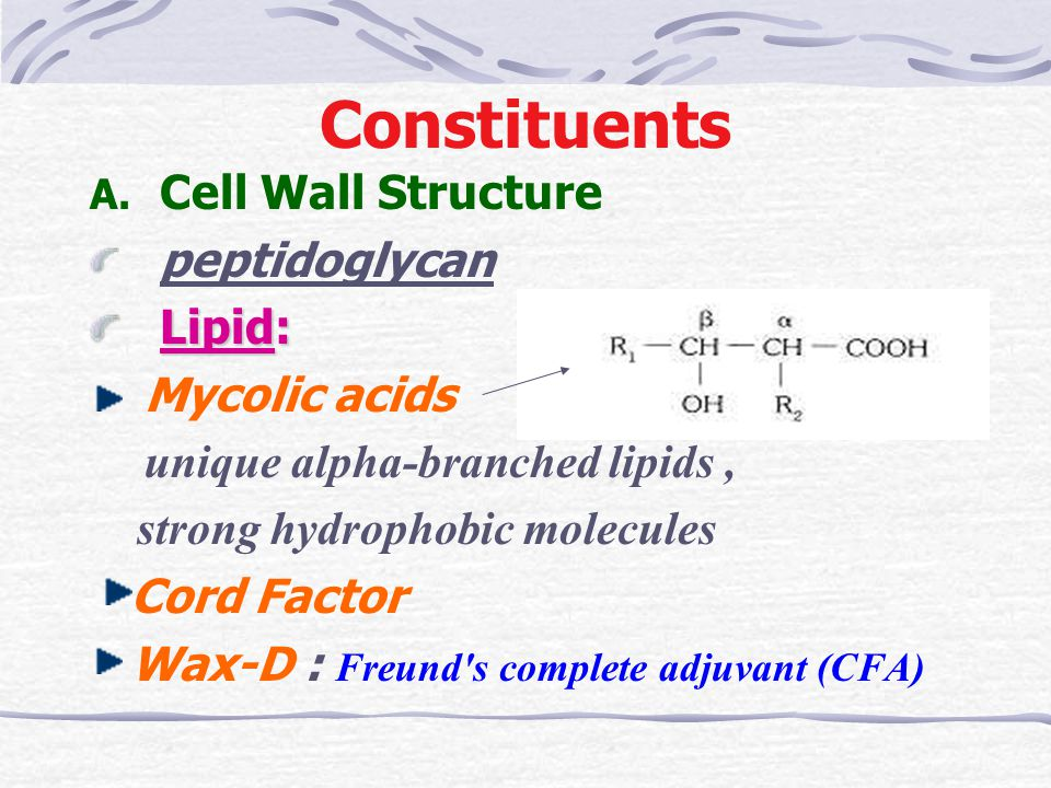 Constituents Cell Wall Structure peptidoglycan Lipid: Mycolic acids