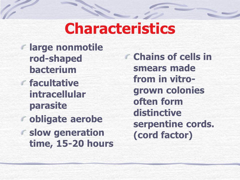 Characteristics large nonmotile rod-shaped bacterium
