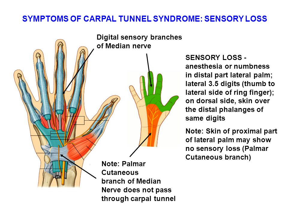 Anatomy of carpal tunnel