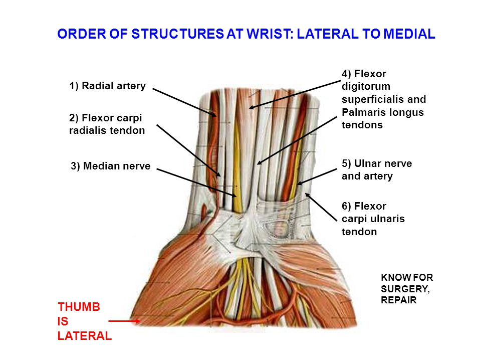ORDER OF STRUCTURES AT WRIST: LATERAL TO MEDIAL