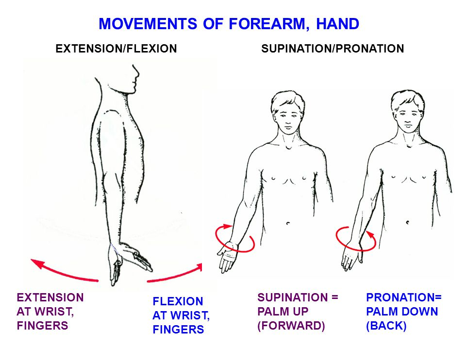 MOVEMENTS OF FOREARM, HAND