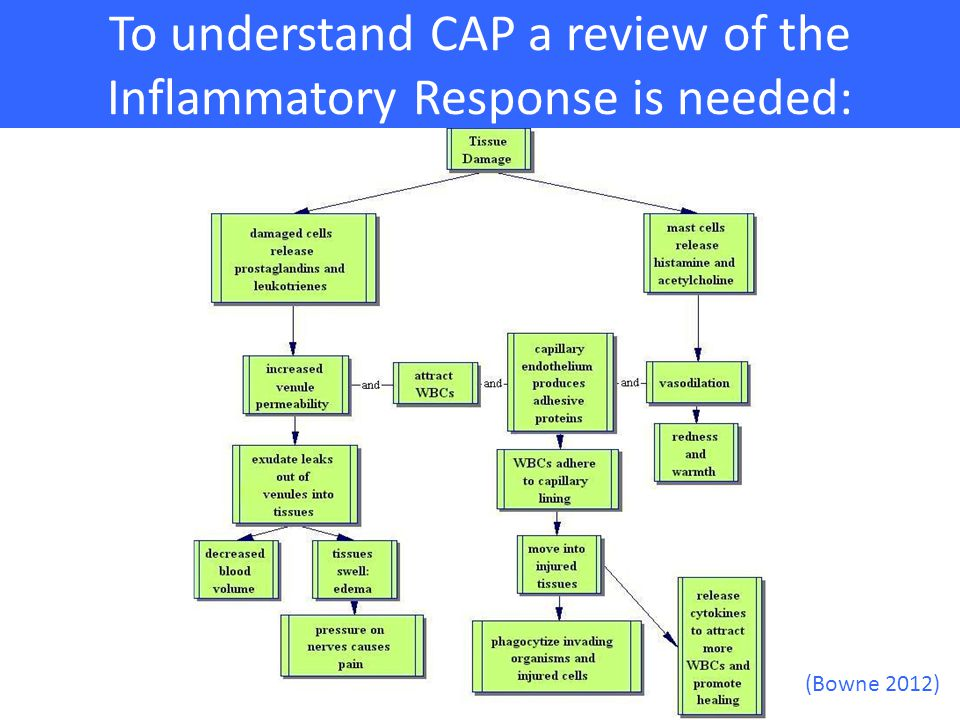 To understand CAP a review of the Inflammatory Response is needed: