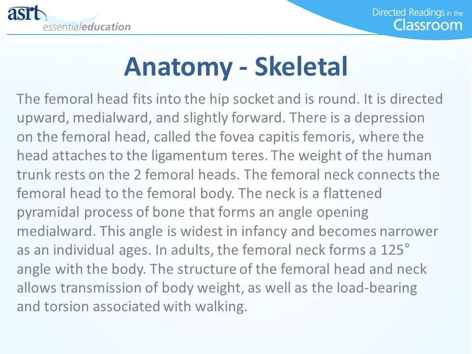 Anatomy - Skeletal