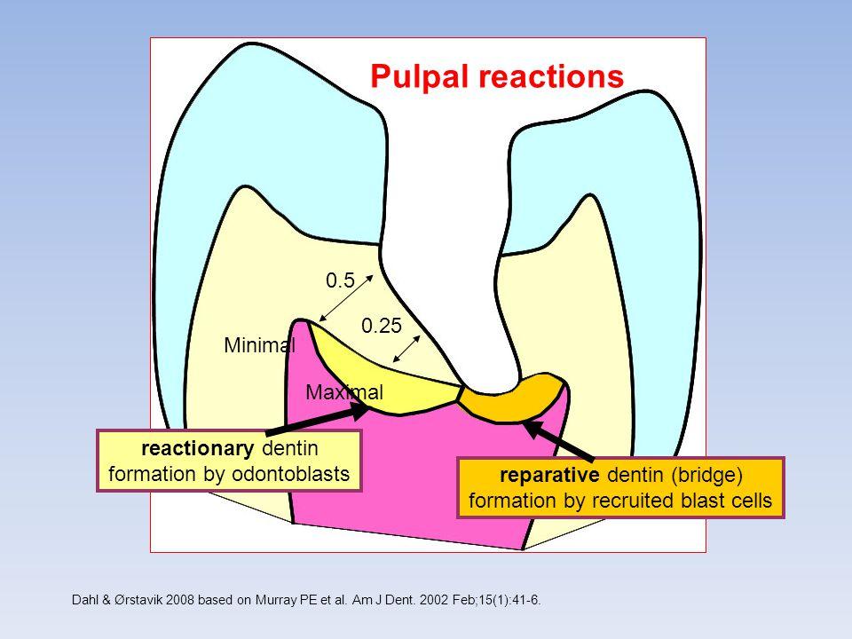Pulpal reactions 0.5 0.25 Minimal Maximal