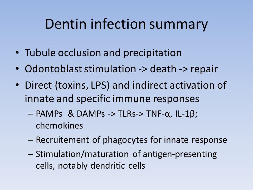 Dentin infection summary
