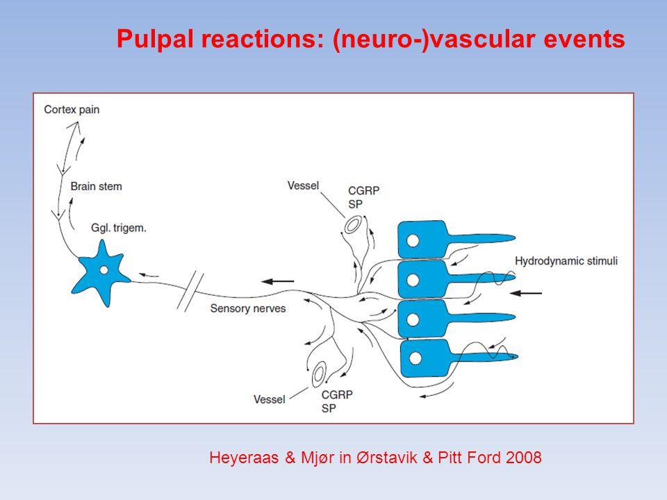Pulpal reactions: (neuro-)vascular events