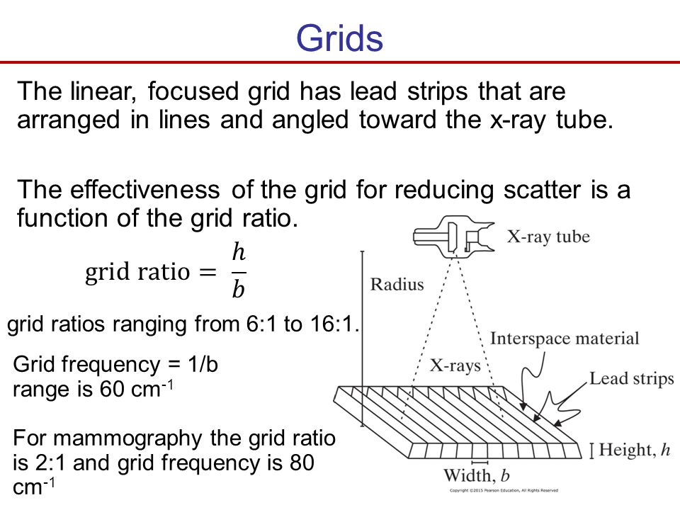 Grids The linear, focused grid has lead strips that are arranged in lines and angled toward the x-ray tube.