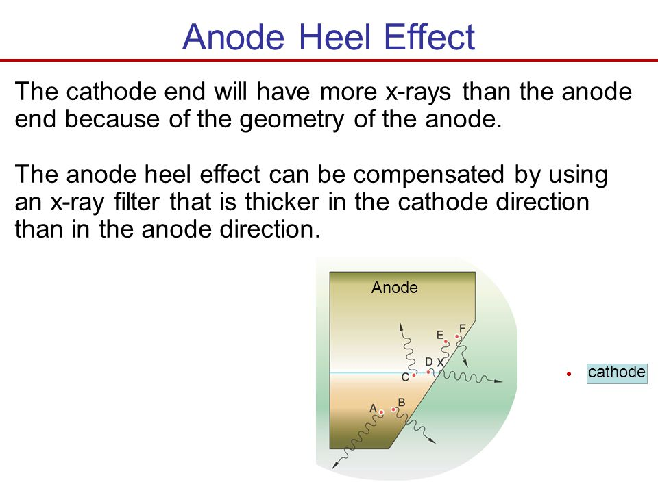 Anode Heel Effect The cathode end will have more x-rays than the anode end because of the geometry of the anode.