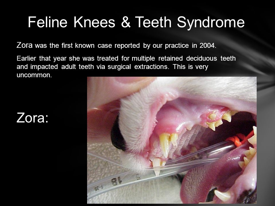 Feline Knees & Teeth Syndrome