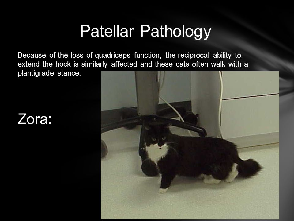 Patellar Pathology Zora: