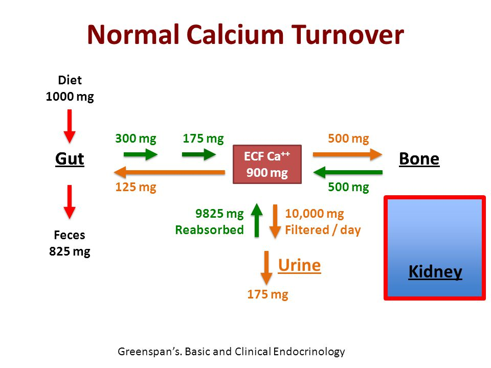 Normal Calcium Turnover