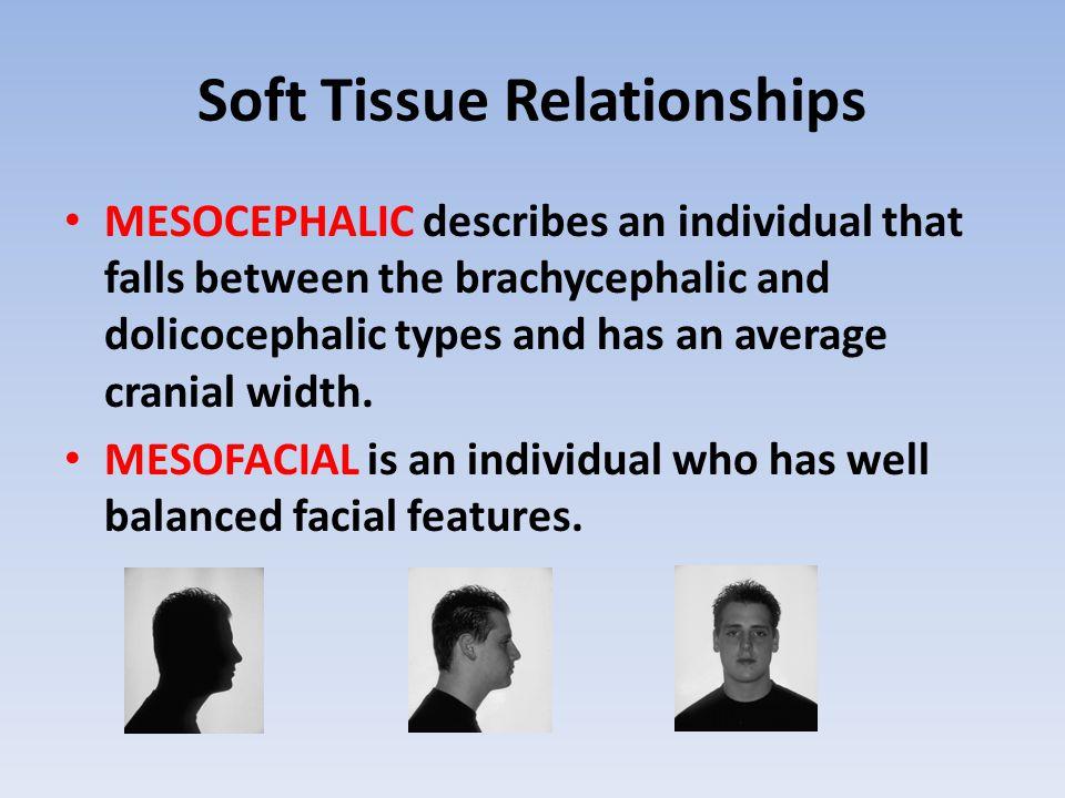 Soft Tissue Relationships