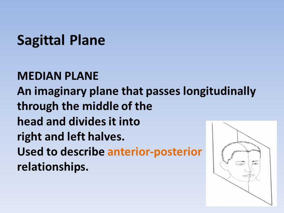 Sagittal Plane MEDIAN PLANE An imaginary plane that passes longitudinally through the middle of the head and divides it into right and left halves.