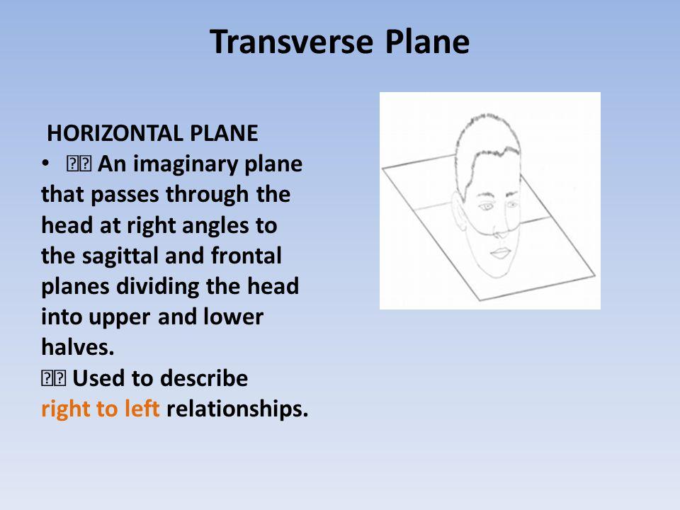 Transverse Plane HORIZONTAL PLANE  An imaginary plane