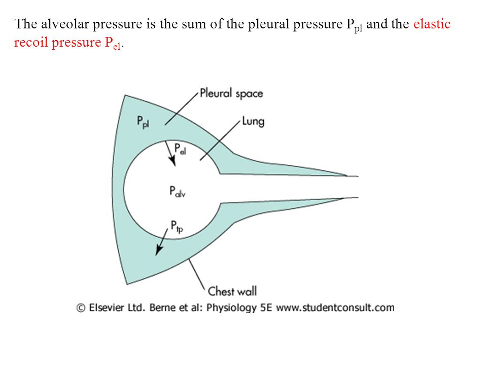 The alveolar pressure is the sum of the pleural pressure Ppl and the elastic recoil pressure Pel.