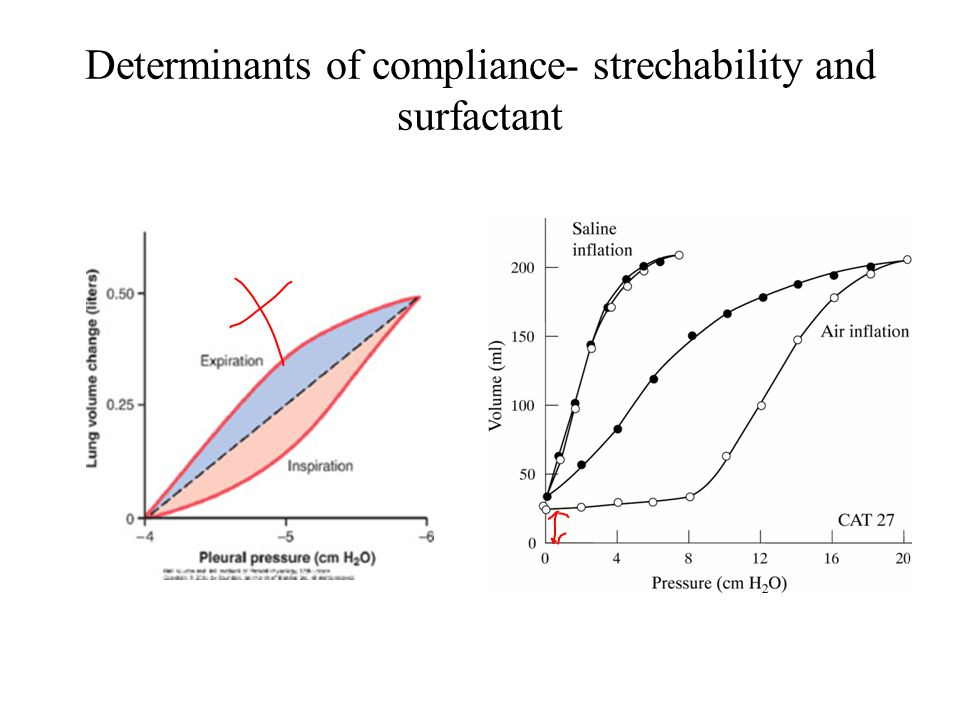 Determinants of compliance- strechability and surfactant