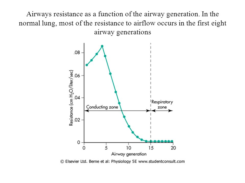 Airways resistance as a function of the airway generation