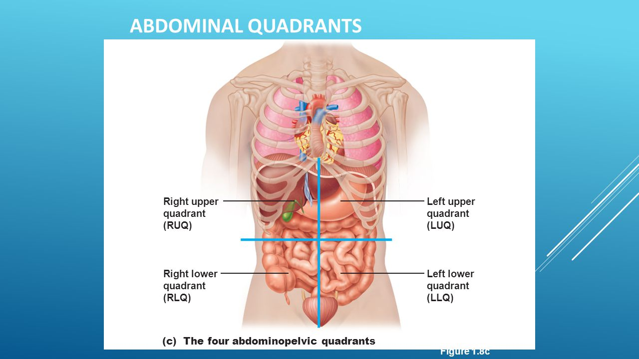 Abdominal Quadrants Right upper quadrant (RUQ) Left upper quadrant