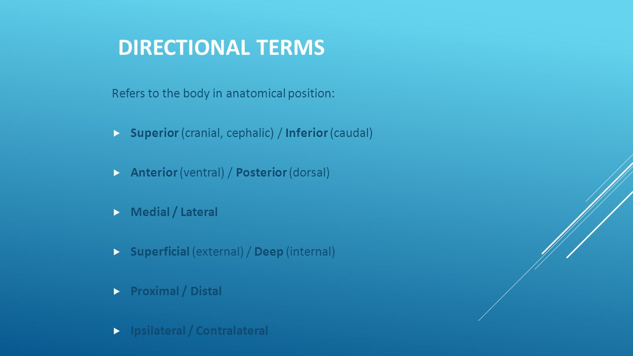 Directional Terms Refers to the body in anatomical position:
