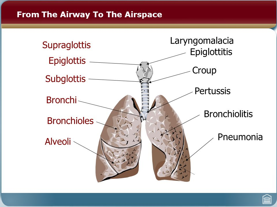 From The Airway To The Airspace