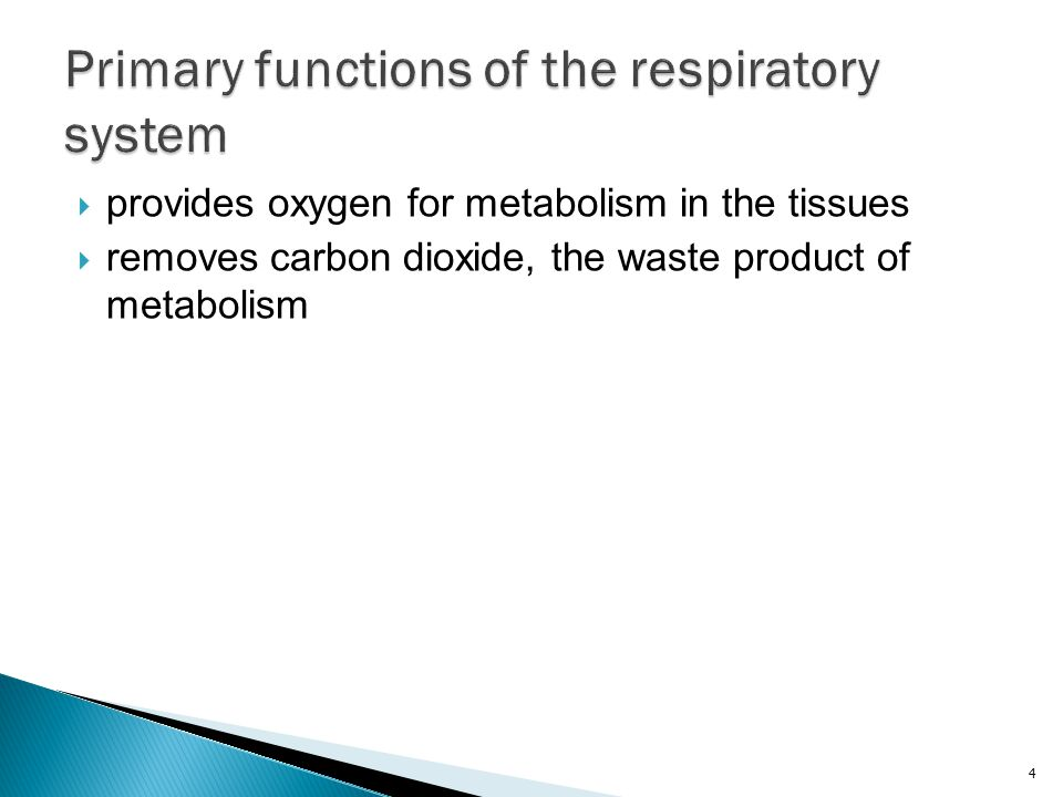 Primary functions of the respiratory system