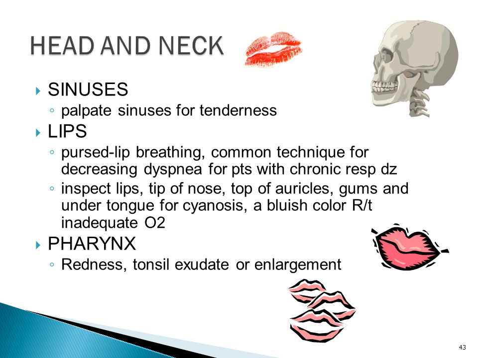 HEAD AND NECK SINUSES LIPS PHARYNX palpate sinuses for tenderness