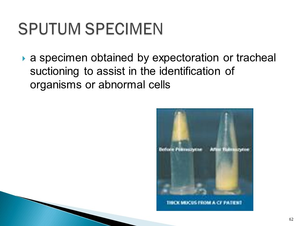 SPUTUM SPECIMEN a specimen obtained by expectoration or tracheal suctioning to assist in the identification of organisms or abnormal cells.