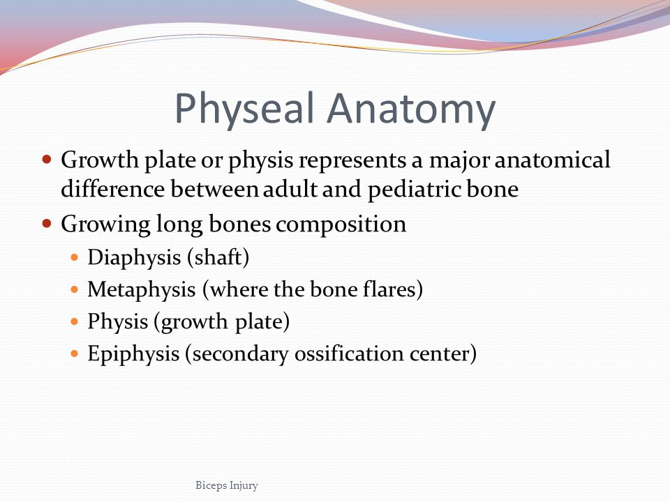 Physeal Anatomy Growth plate or physis represents a major anatomical difference between adult and pediatric bone.