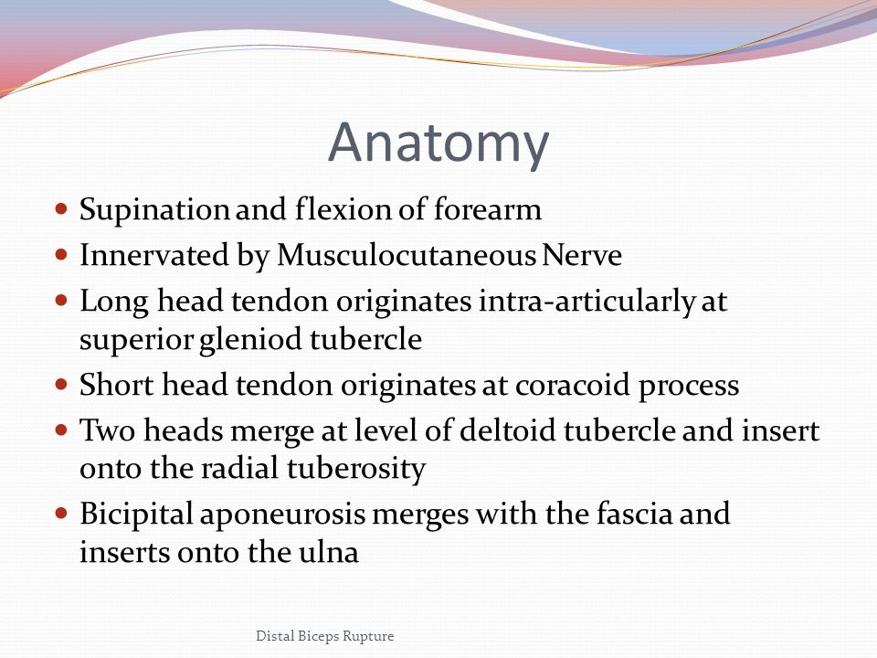 Anatomy Supination and flexion of forearm