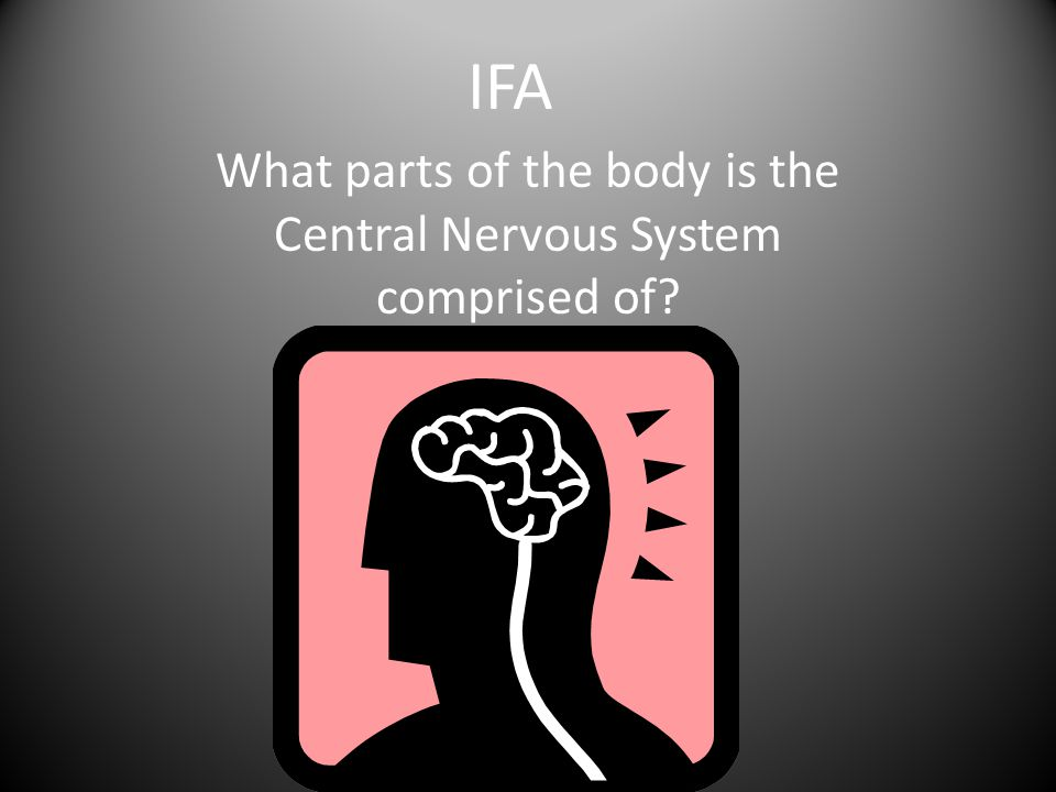 What parts of the body is the Central Nervous System comprised of