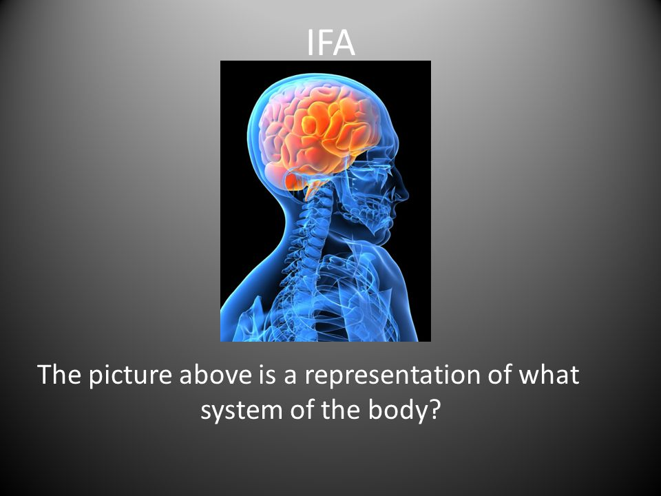 The picture above is a representation of what system of the body