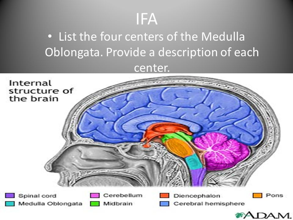 IFA List the four centers of the Medulla Oblongata. Provide a description of each center.