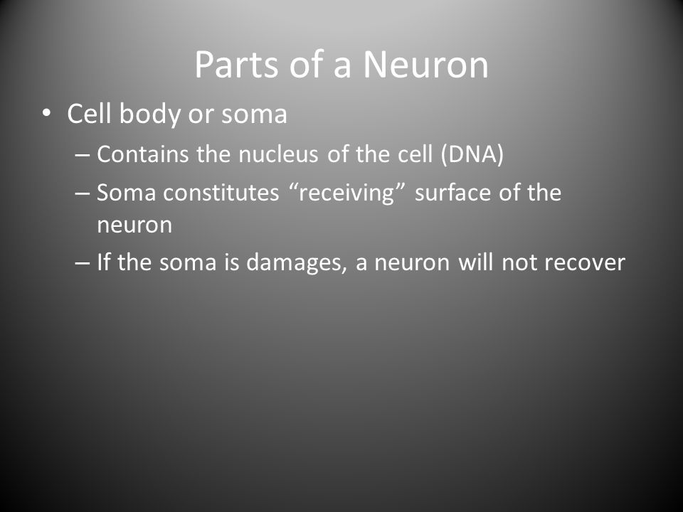 Parts of a Neuron Cell body or soma