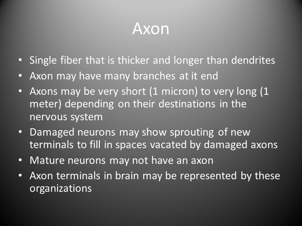 Axon Single fiber that is thicker and longer than dendrites