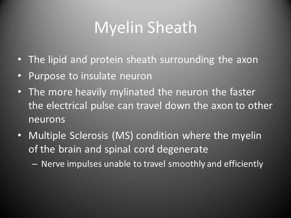 Myelin Sheath The lipid and protein sheath surrounding the axon