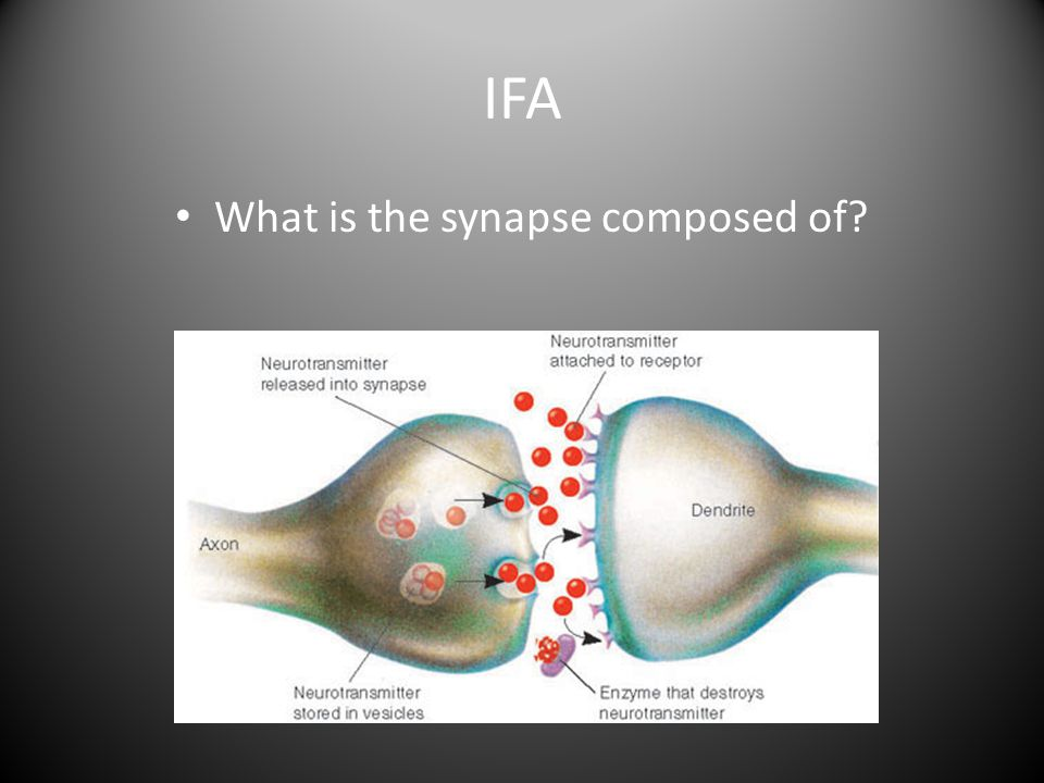 What is the synapse composed of