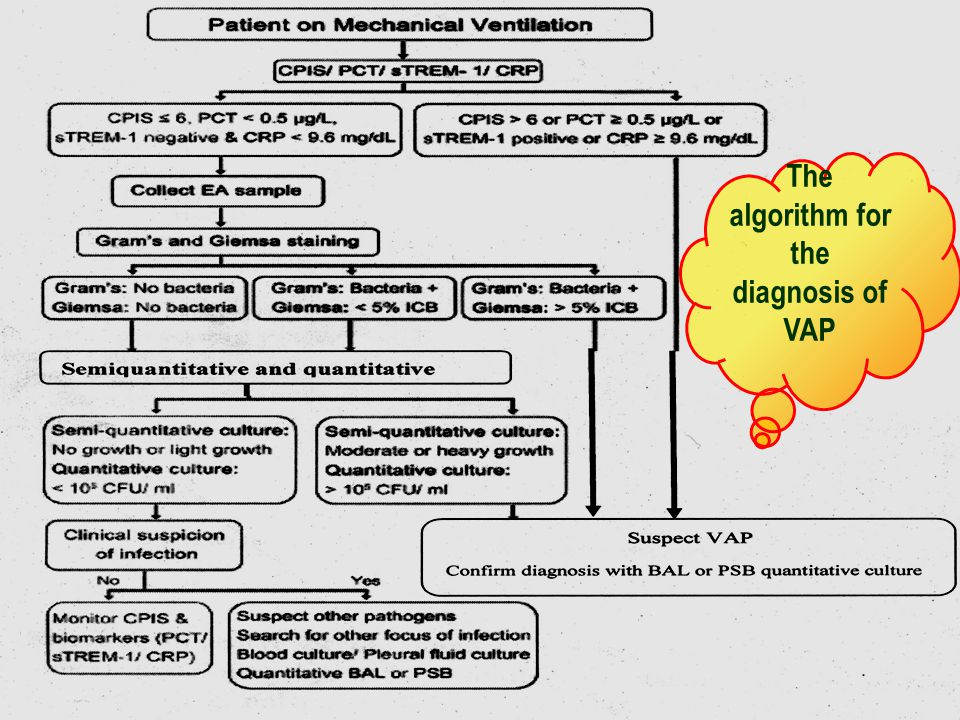 The algorithm for the diagnosis of VAP