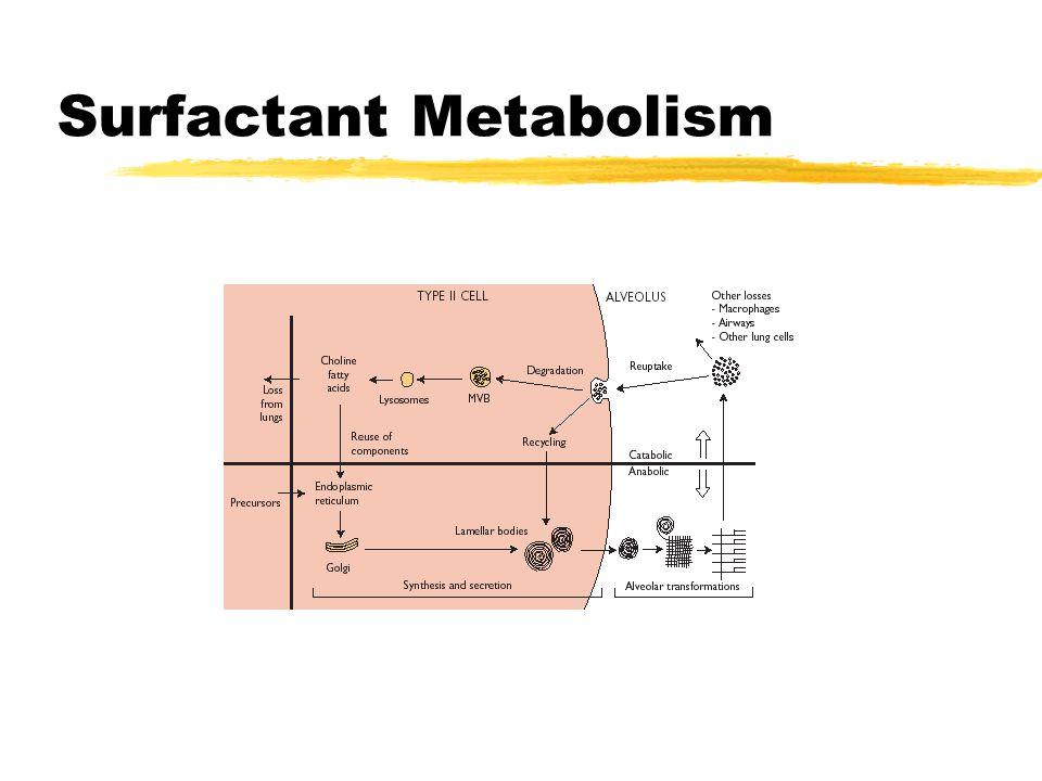 Surfactant Metabolism