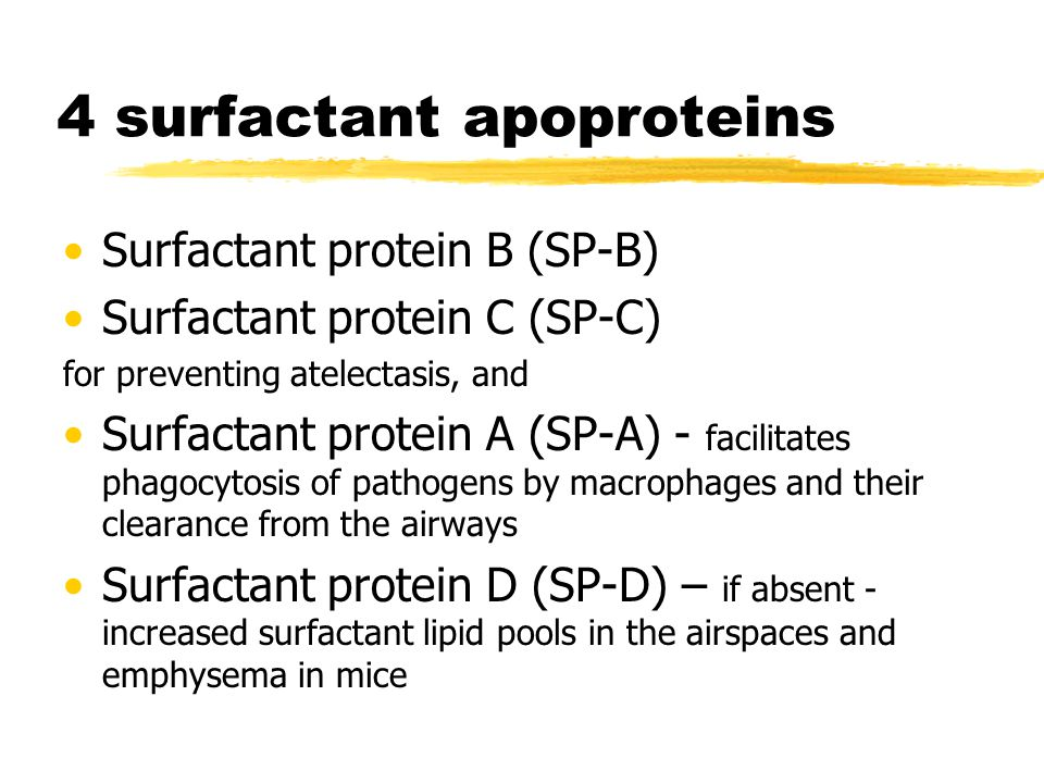 4 surfactant apoproteins