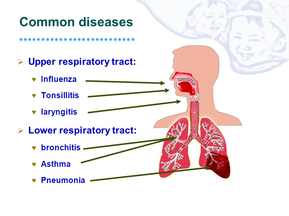 upper respiratory tract - ppt video online download, Human Body