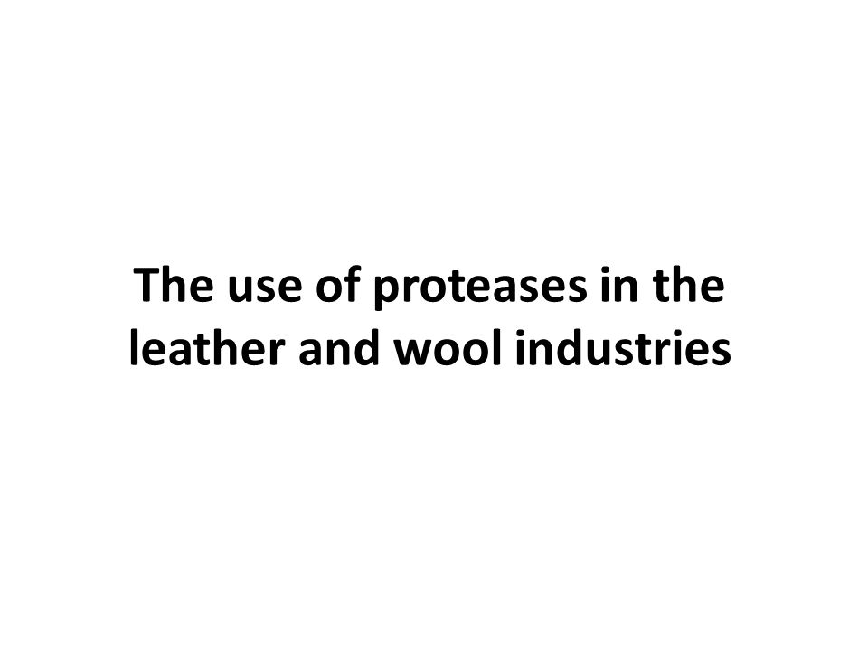 The use of proteases in the leather and wool industries