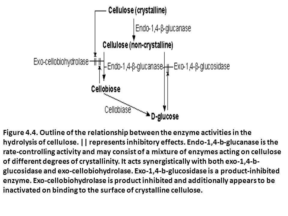 Figure 4.4. Outline of the relationship between the enzyme activities in the hydrolysis of cellulose.